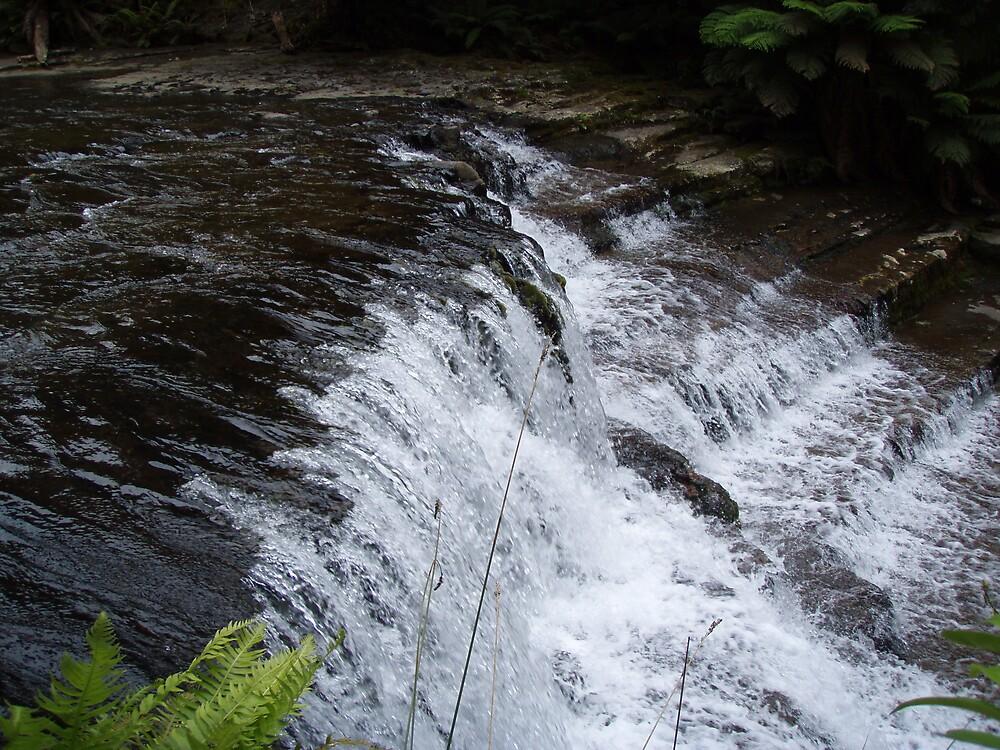 at Liffey Falls, Tasmania   -  rock steps by gaylene