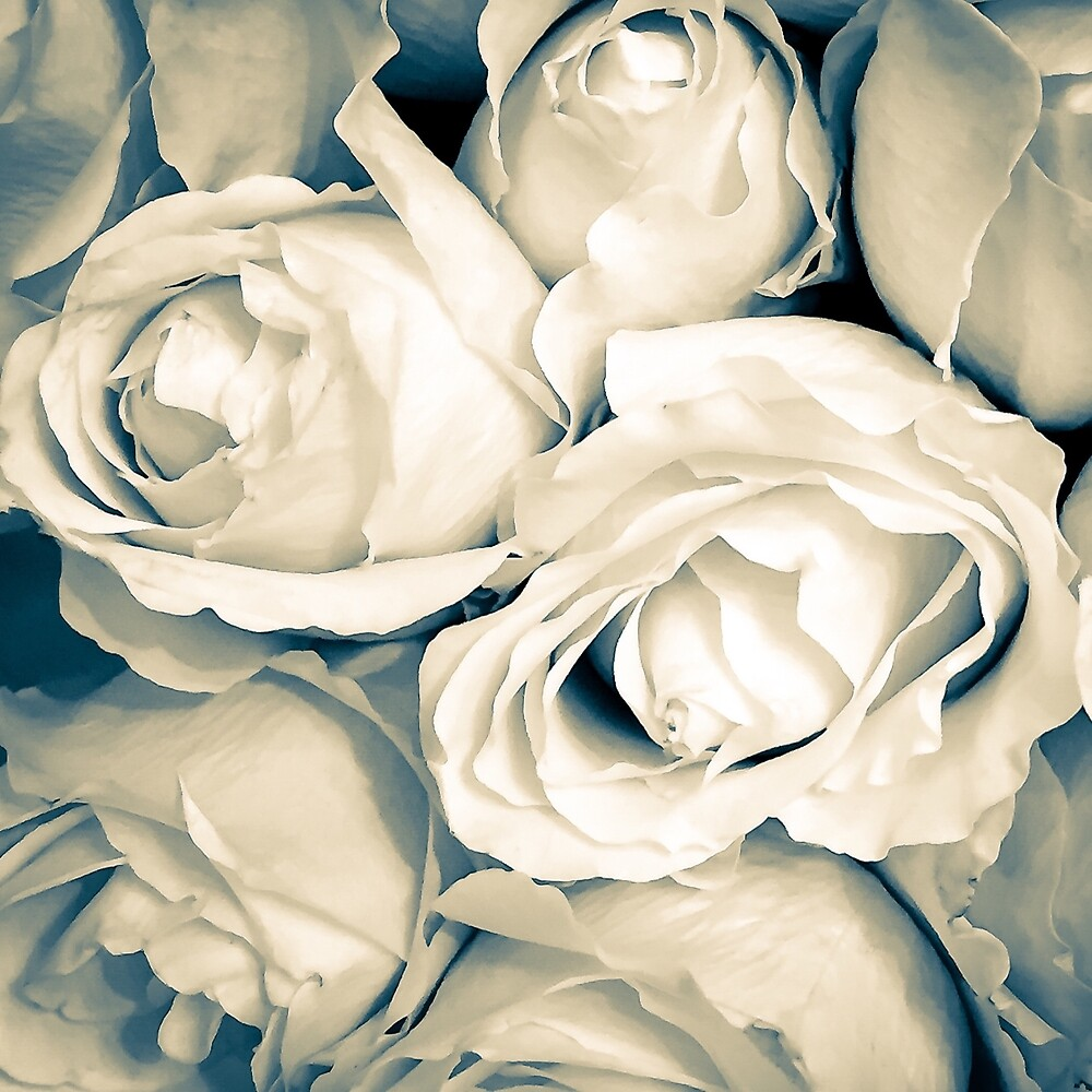 Vintage Roses by Jacqueline Cooper