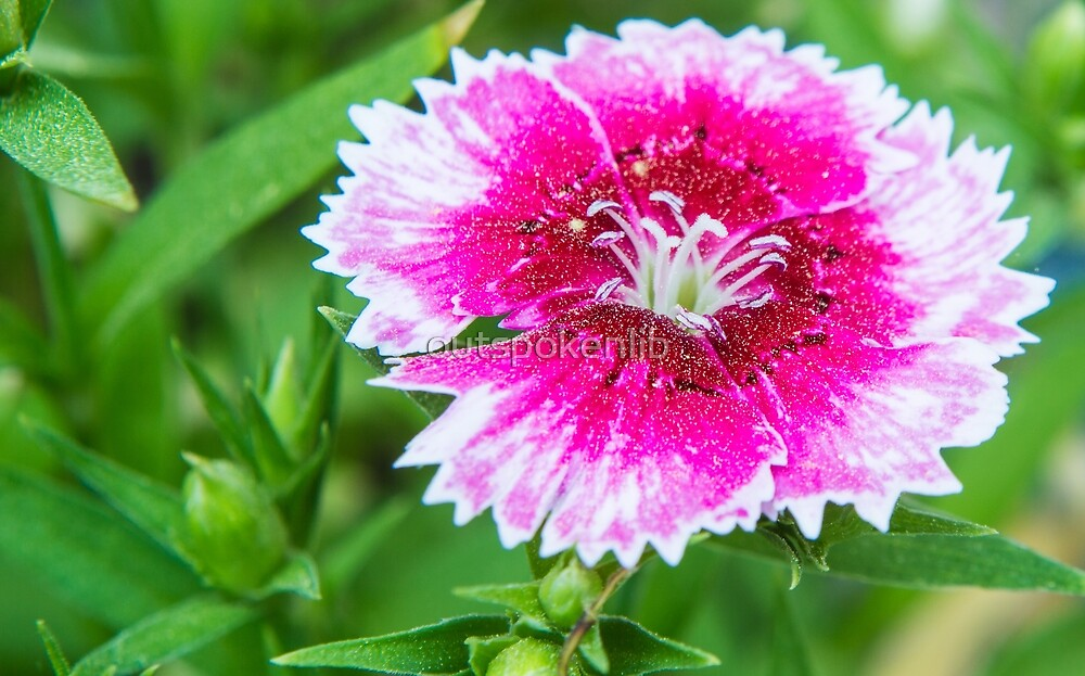 Pink flower by outspokenlib