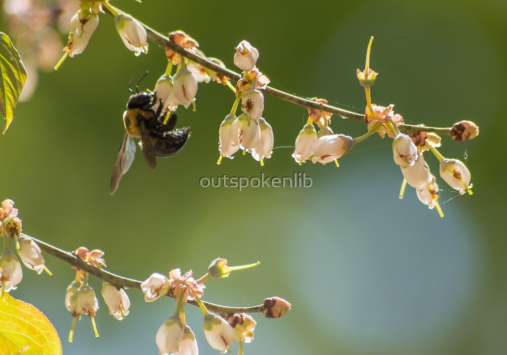 Bee flying by outspokenlib
