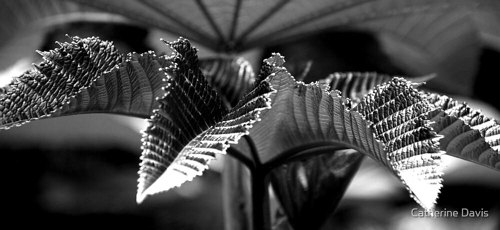 Castor Oil Plant Black and White by Catherine Davis