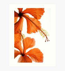 Hibiscus Falling Art Print