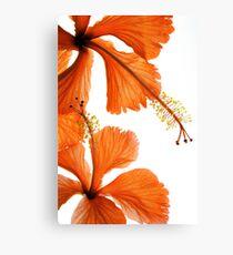 Hibiscus Falling Canvas Print