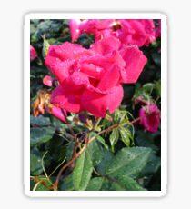 Dewy Rose Sticker