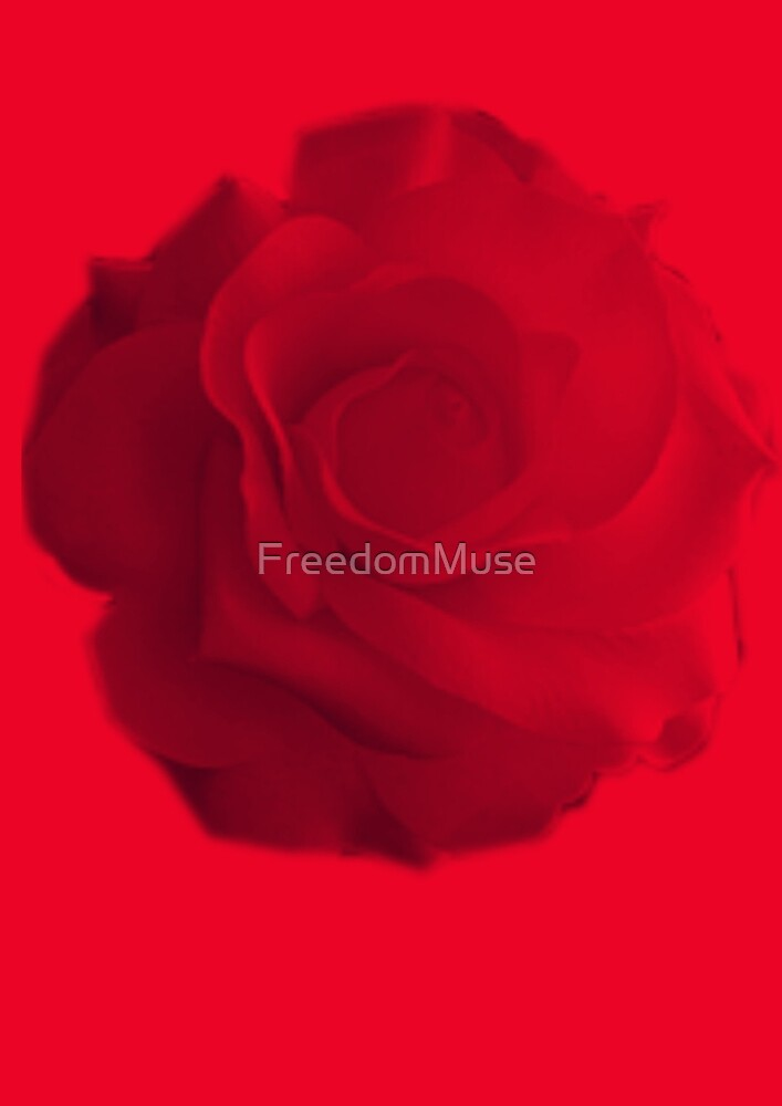 A rose by FreedomMuse