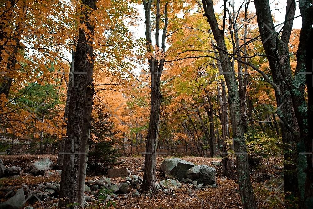 Autumn Wilderness by Zohar Lindenbaum