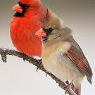 Northern Cardinal Pair on Pine Branch by Bonnie T.  Barry