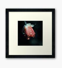 5148 Framed Print