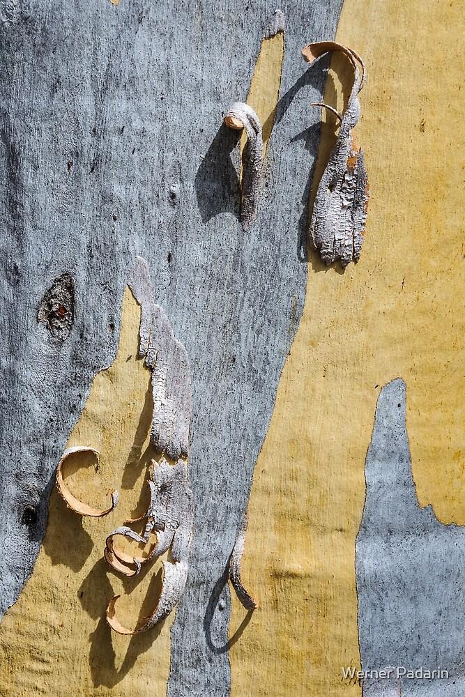 Bark GD4 by Werner Padarin
