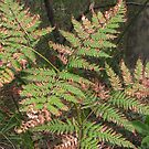 Withering Fern by Sharon Brown