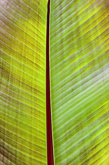 Banana Leaf by Zigzagmtart