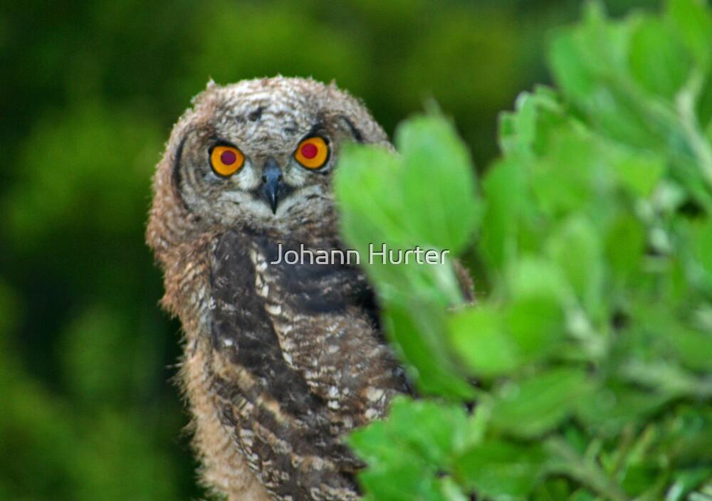 Owl by Johann Hurter