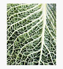 Savoy cabbage leaf close up Photographic Print