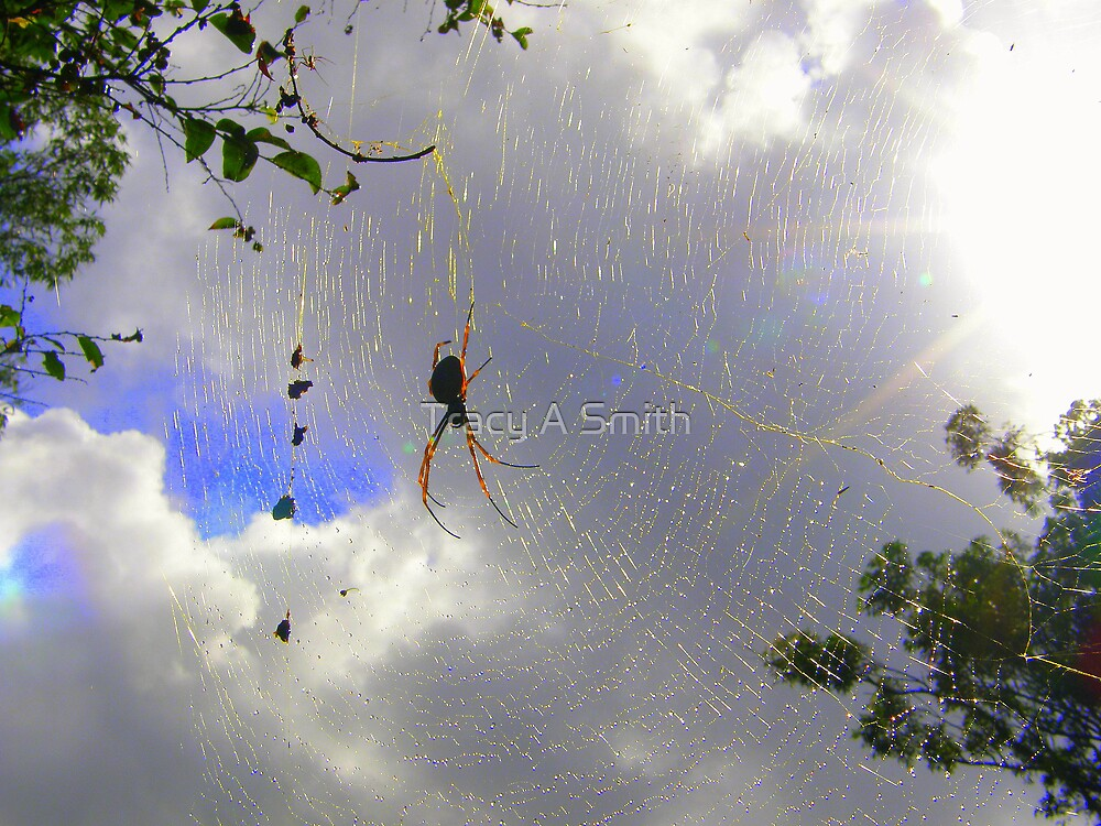 Surfing the web by Tracy A Smith