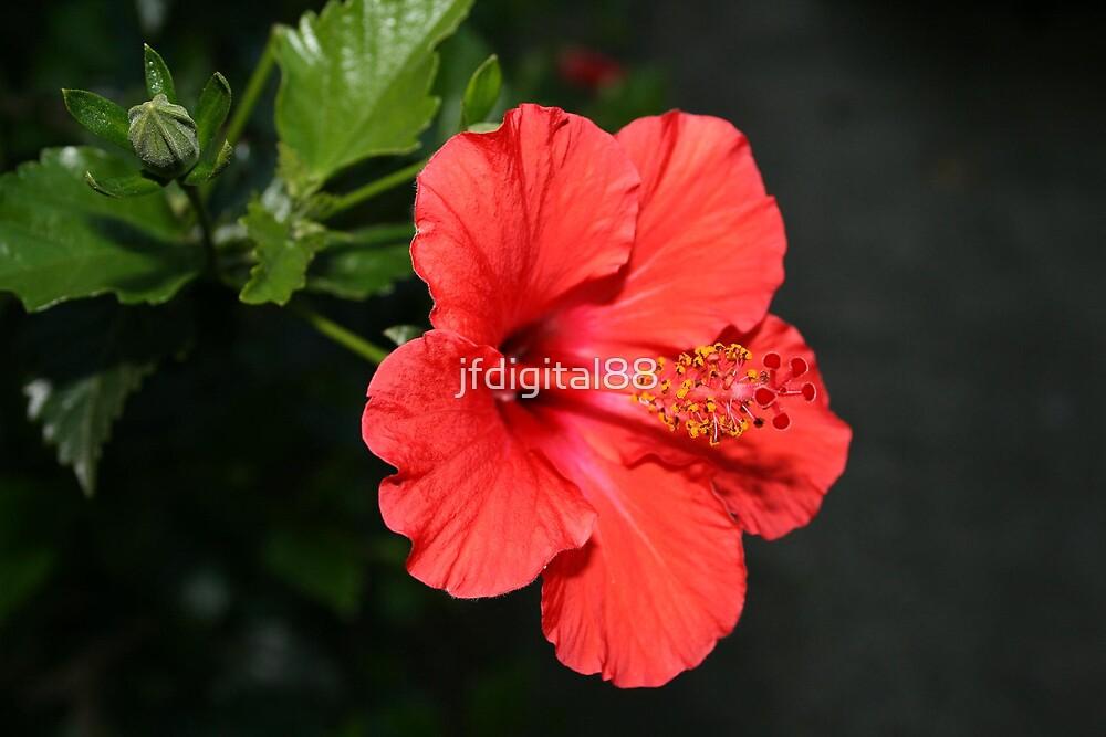 Flower Closeup by jfdigital88