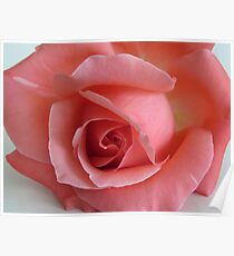 Coral Rose Poster