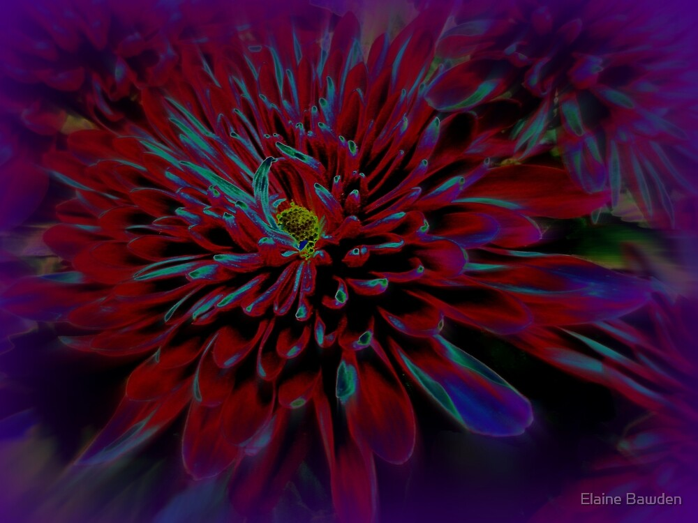 Sipping Deep Purple by Elaine Bawden