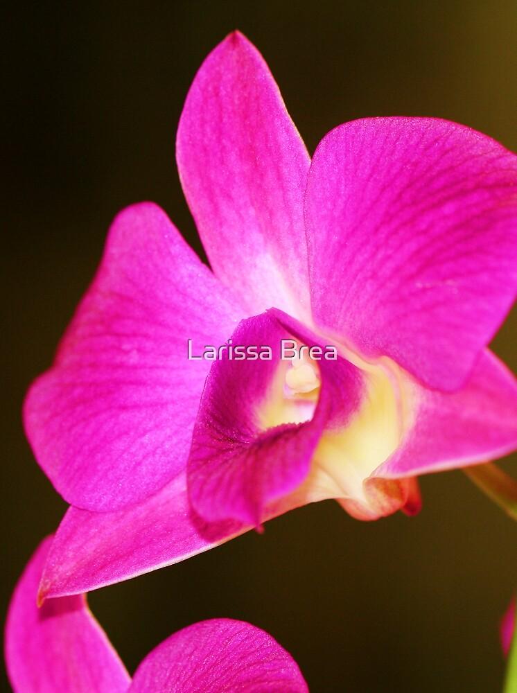 Orchid I by Larissa Brea