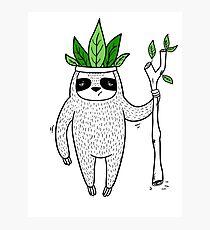 King of Sloth Photographic Print