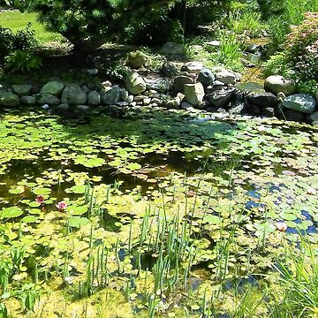 Lillypad Pond by GlassTable