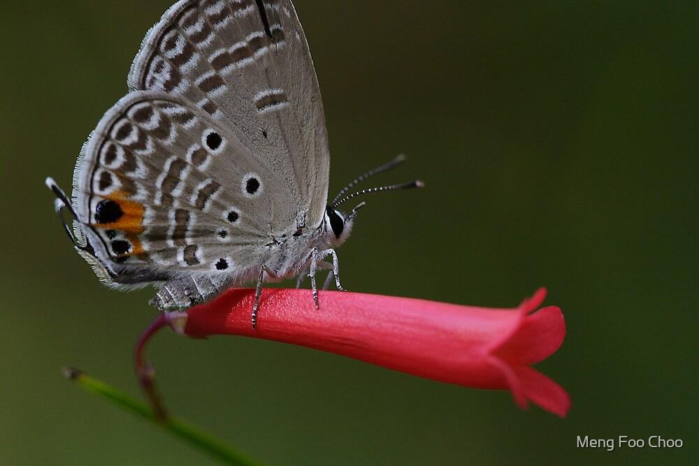 butterfly by Meng Foo Choo