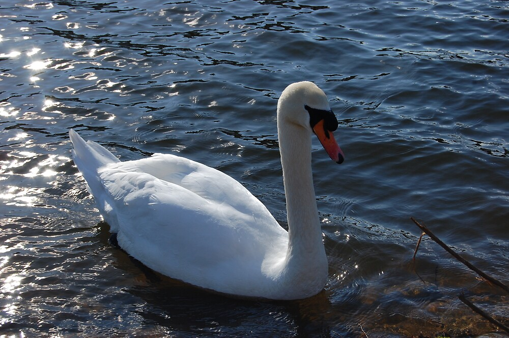 Swan At The River by Anton Perrins