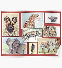 Lodge décor – South African wildlife collection Poster