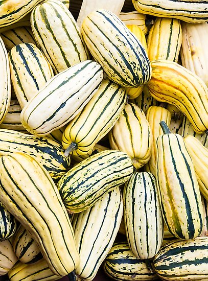 Delicata squash on display by Zigzagmtart