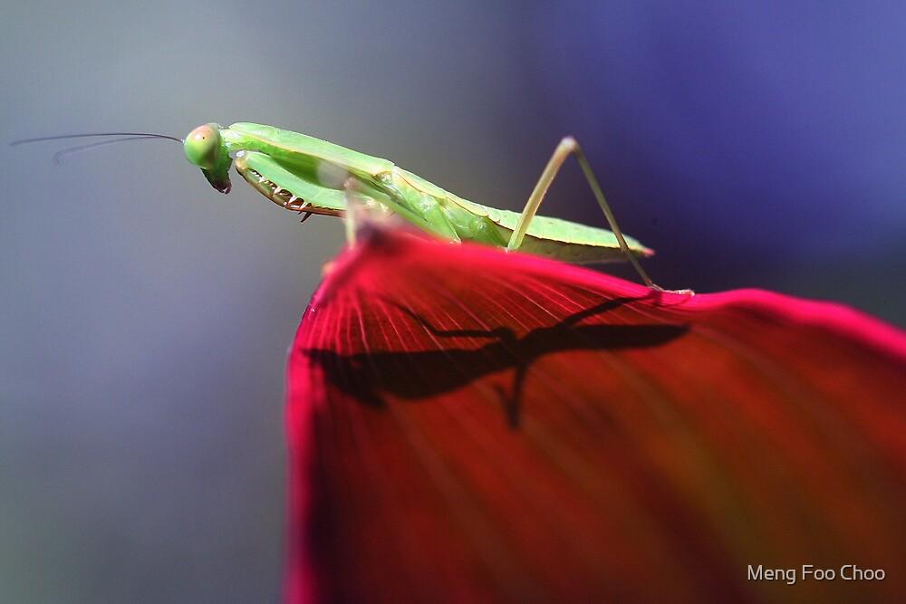 Mantis against the noon sun. by Meng Foo Choo