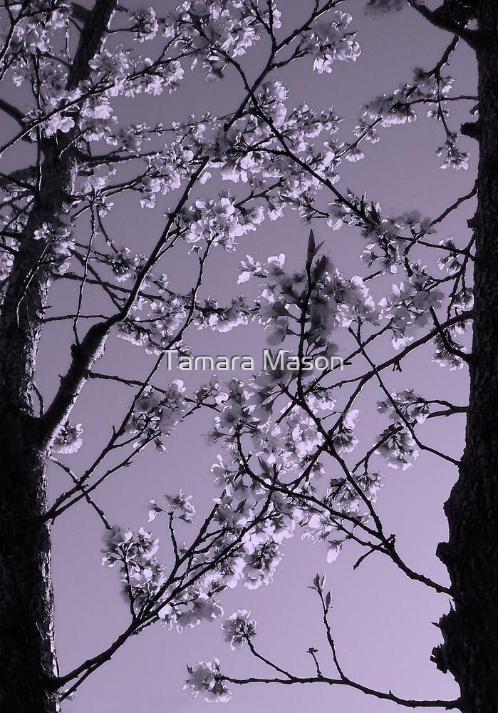 Blooming Violet by Tamara Mason