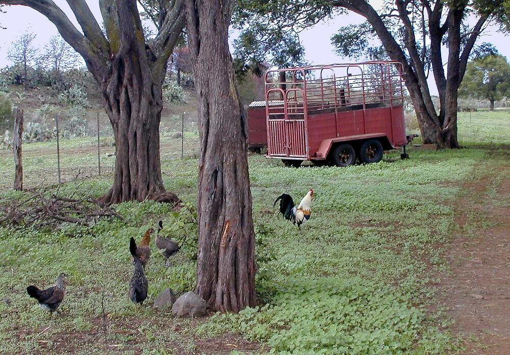 Kula Chickens by Kathryn Eve Rycroft