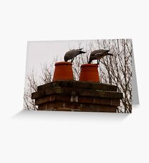 Chimney Ducks Greeting Card