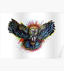 Color Barn Owl Poster