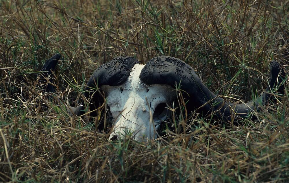 Jan's Buffalo Skull by bertspix