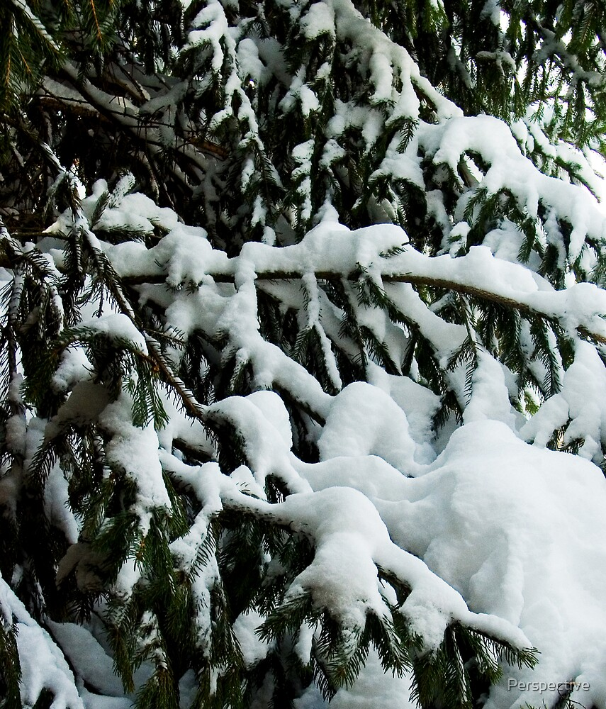 Snow Tree 1 by Perspective
