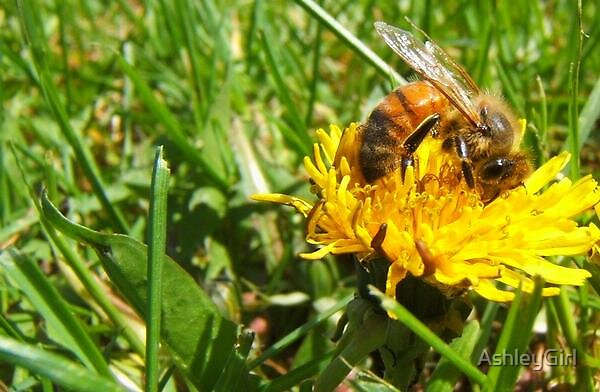 Bummble Bee by AshleyGirl