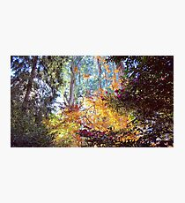 Autumn in the Dandenong Ranges: Sherbrooke, 2017 Photographic Print