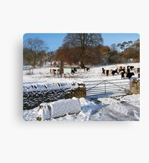 Cold Cows Canvas Print