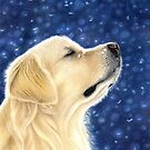 Golden Retriever - Magic Moment by bydonna