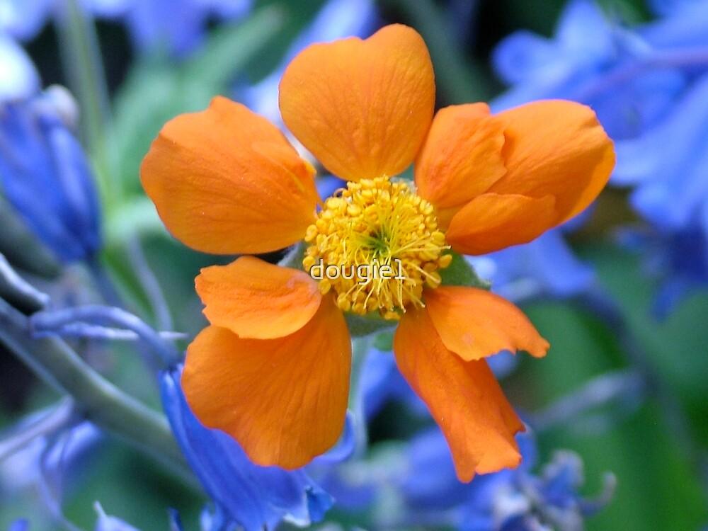 Flower from Edna's Garden  by dougie1