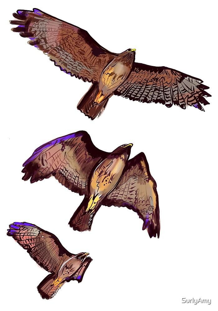 Hawk in Flight by SurlyAmy