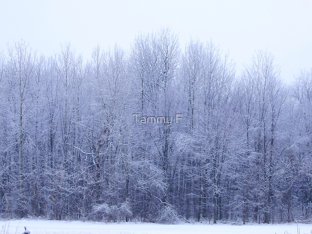 Icy Woods by Tammy F