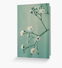 Gypsophila Greeting Card