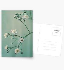 Gypsophila Postcards