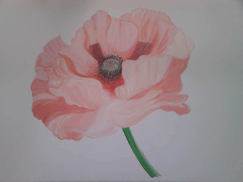 Giant Pink Poppy by FlorenceandBee