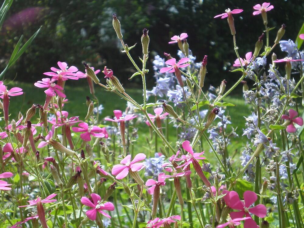 Flowers by JessicaHowroyd