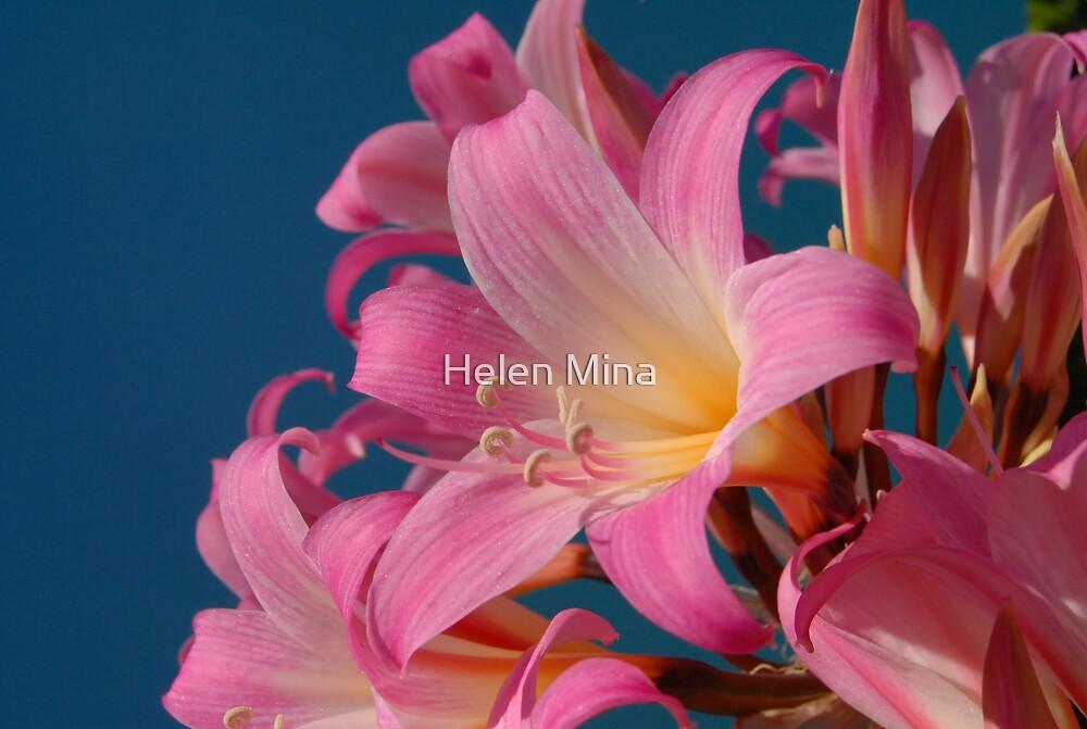Floral Fauna by Helen Mina