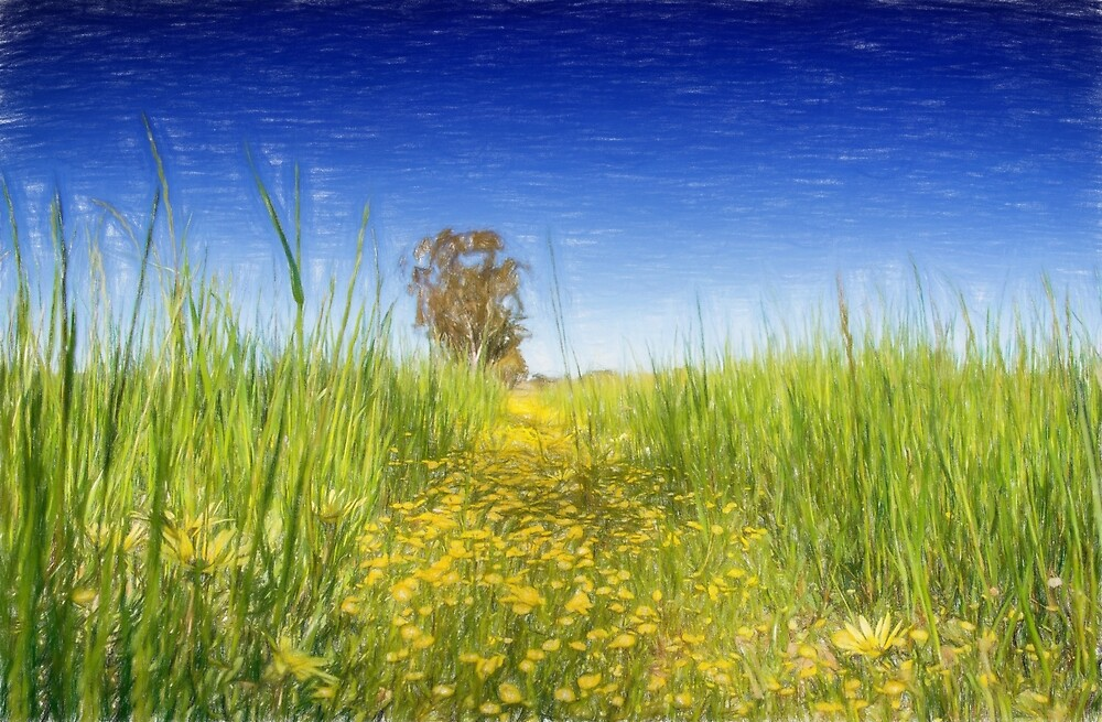 Summer meadow by Cathy Withers-Clarke