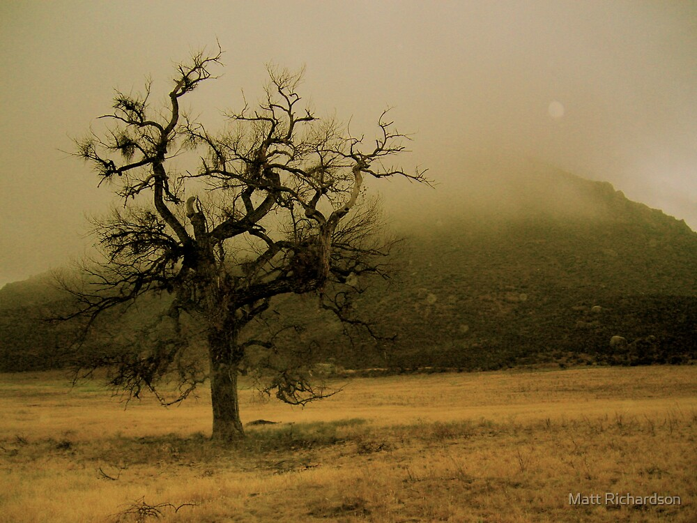 lonesome by Matt Richardson