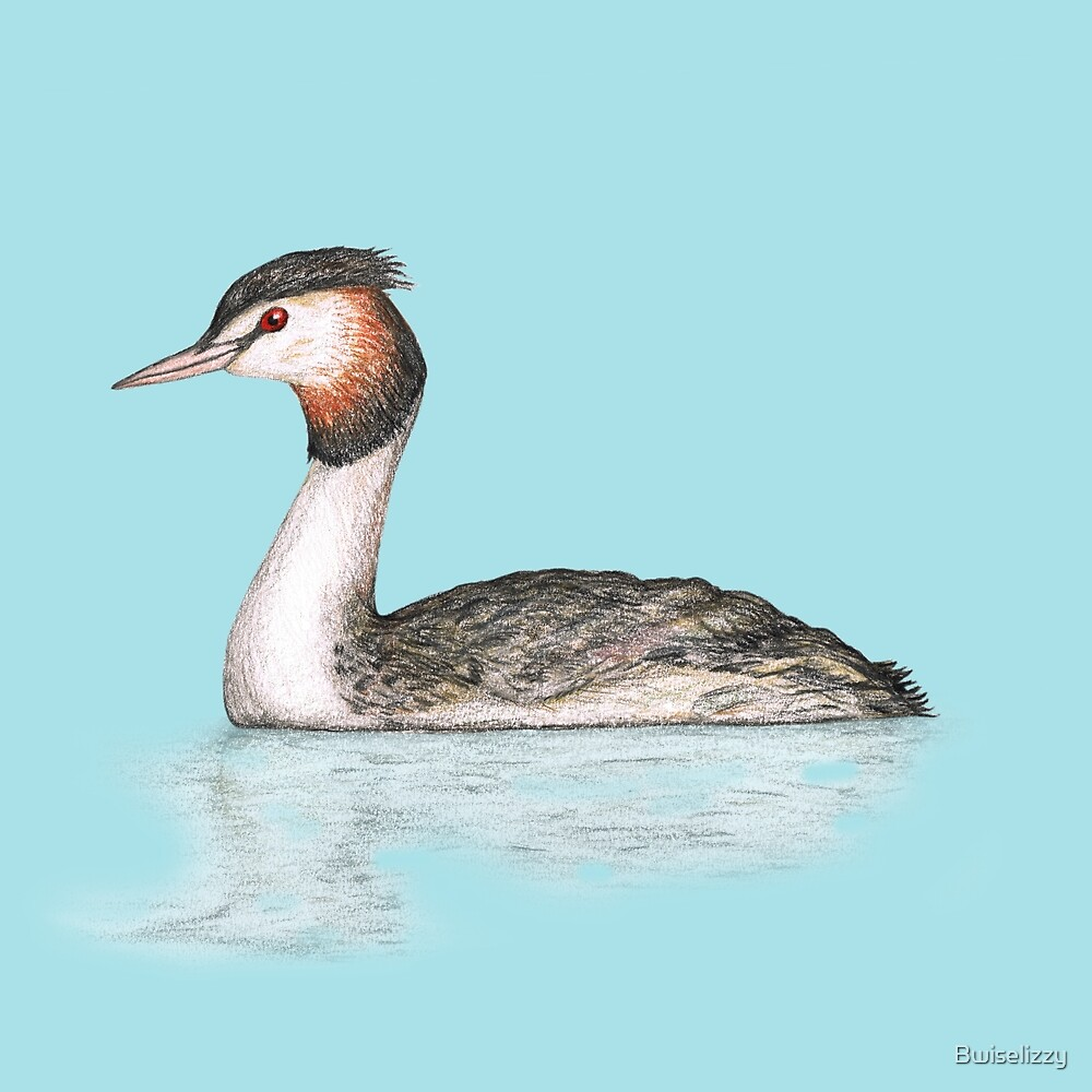 Great crested grebe pencildrawing by Bwiselizzy
